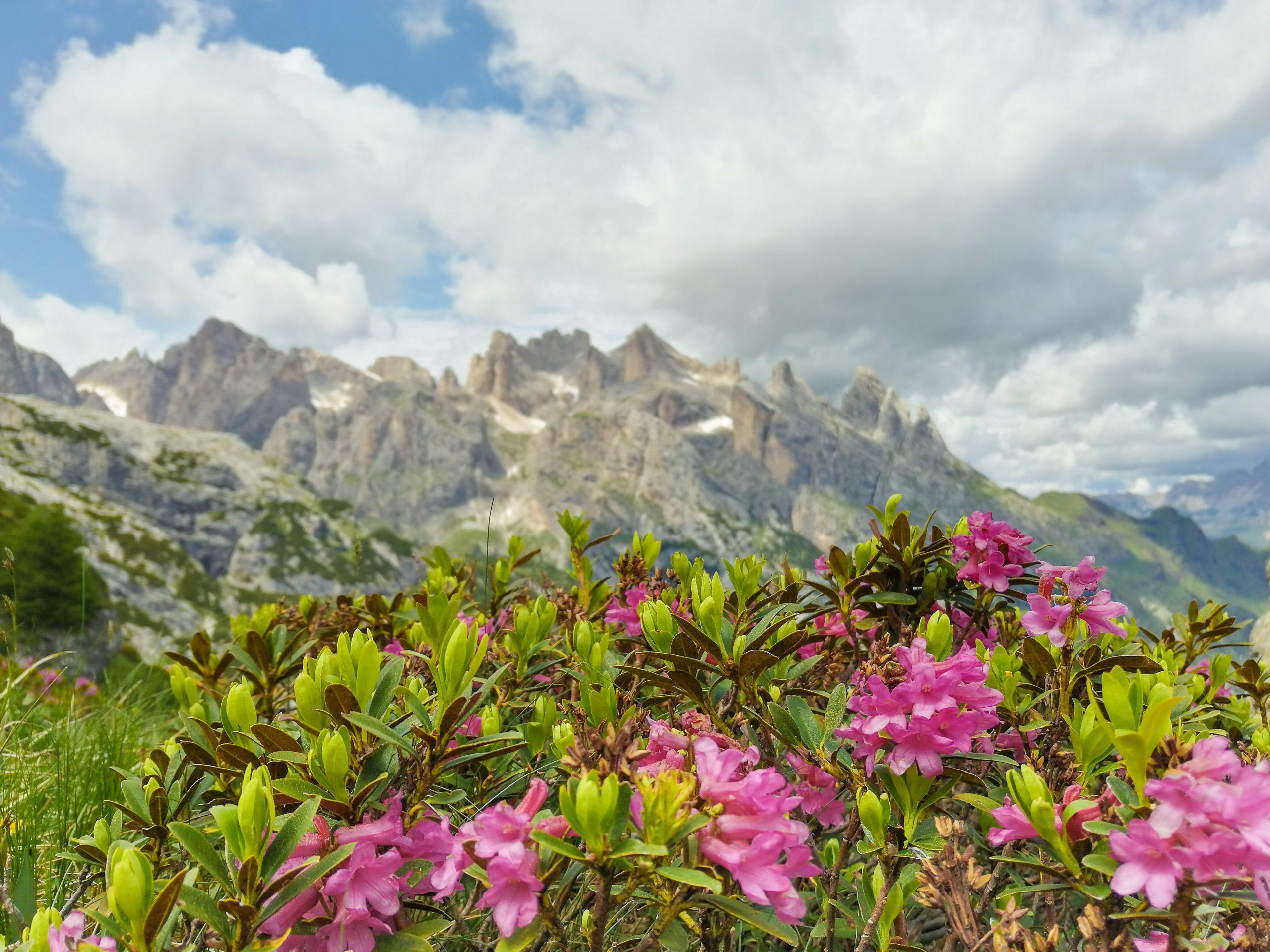 Spettacolare vista sulle Pale di San Martino